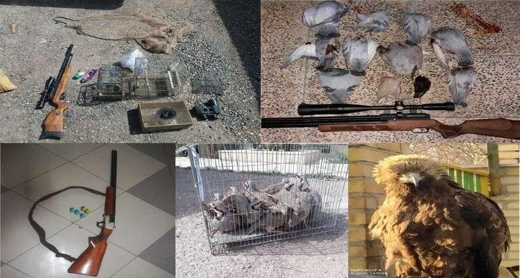 کشف و ضبط ۶۳ گونه از متخلفین در استان قزوین