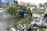 سقوط ۶۱ اصله درخت در پی وزش باد شدید و بارش باران