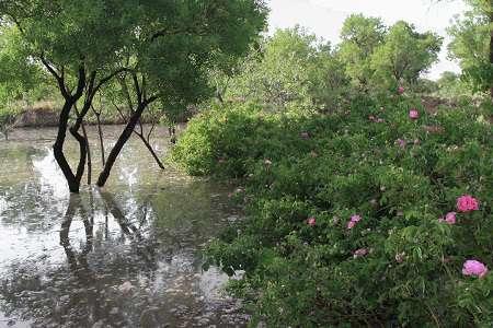 آمادگی سازمان باغستانهای سنتی شهرداری قزوین به منظور انجام آبیاری مکمل برای باغ های کم آب