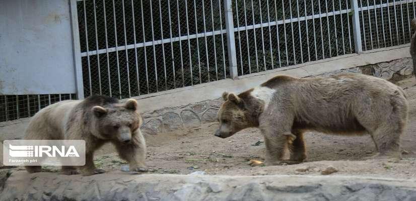 حيوانات باغ وحش صفه اصفهان را نميتوان در طبيعت رها كرد