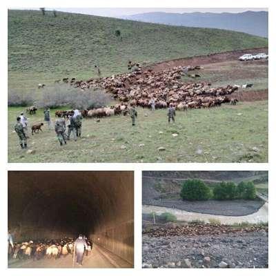 اخراج گله ۱۵۰۰ راسی دام از مراتع منطقه حفاظت شده الموت شرقی