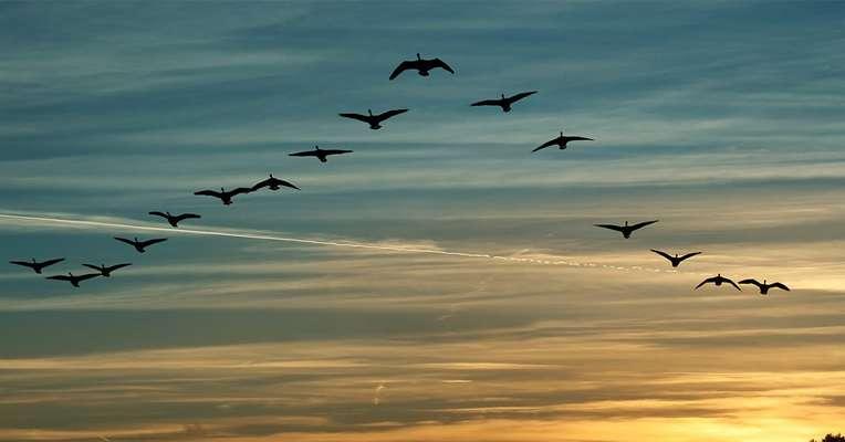 پرندگان مهاجر پيوند دهنده كشورها