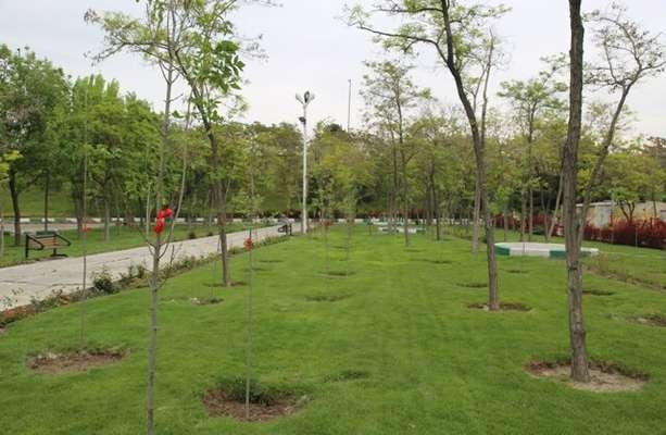 اختصاص ۱۷۰ میلیارد ریال اعتبار برای توسعه فضای سبز در جنوب غرب تبریز