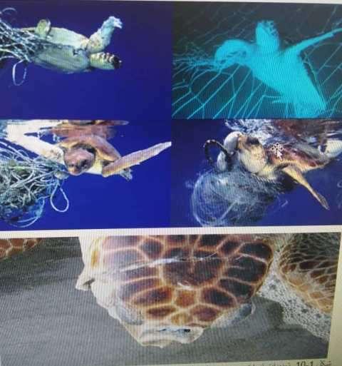 برگشت لاکپشت ها دریایی به زیستگاه