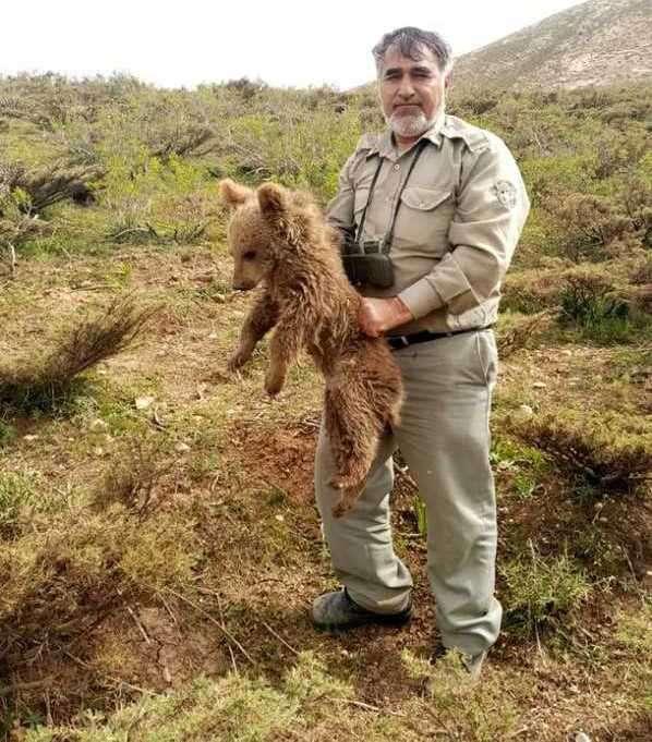 توله خرس سرگردان در چهارمحال و بختیاری به طبیعت بازگشت