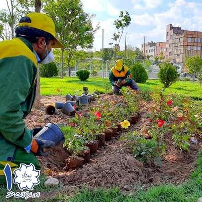 کاشت بالغ بر ۶۱۰۰ اصله درخت و درختچه در فاز اول عملیات کاشت سطح منطقه ۱