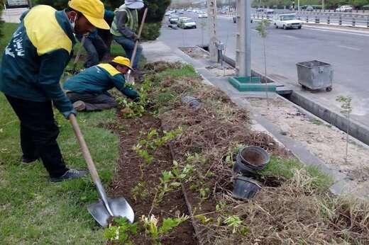 کاشت ۱۳ هزار درخت و درختچه در فضاهای سبز منطقه ۵ تبریز