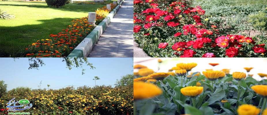 کاشت گونههای کم آببر گل باهدف توسعه فضای سبز شهری در مبارکه
