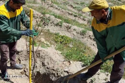 کاشت نهالهای مثمر و درختچههای گل ده در پارک جنگلی عباس میرزا