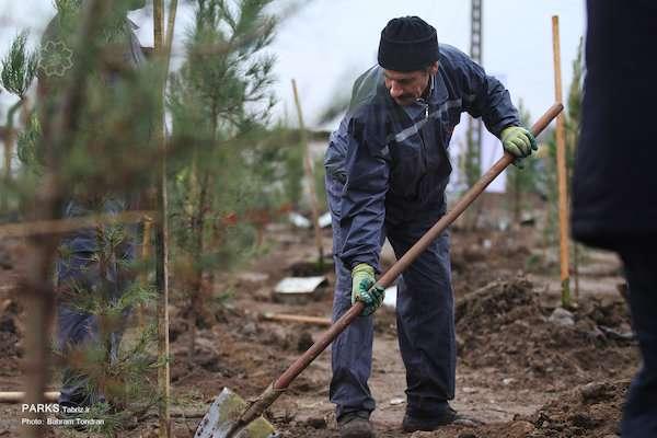 کاشت ۸۰هزار و ۸۴۰ اصله درخت و درختچه در دوماه اخیر/ ریشه های تنومند «نهضت یک میلیون درخت» در خاک تبر ...