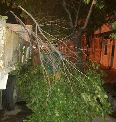 جمع آوری درختان شکسته شده از تند باد شب گذشته از سوی شهرداری منطقه ۱۰ تبریز