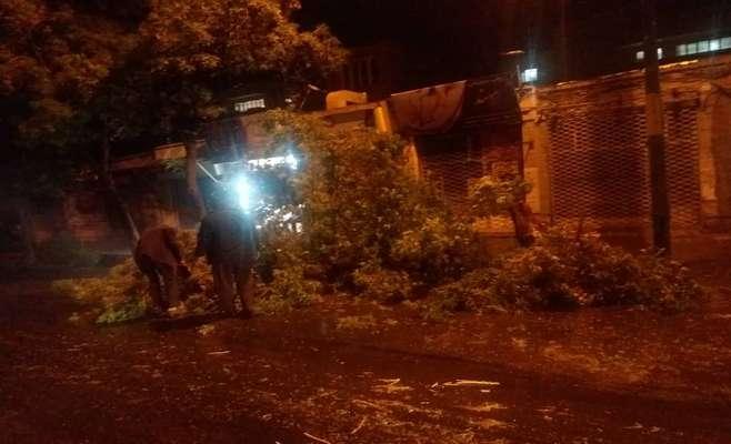 درختان شکسته شده ناشی از تند باد شب گذشته جمع آوری شد