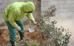 کاشت درخت مقابل منزل با ارسال پیامک