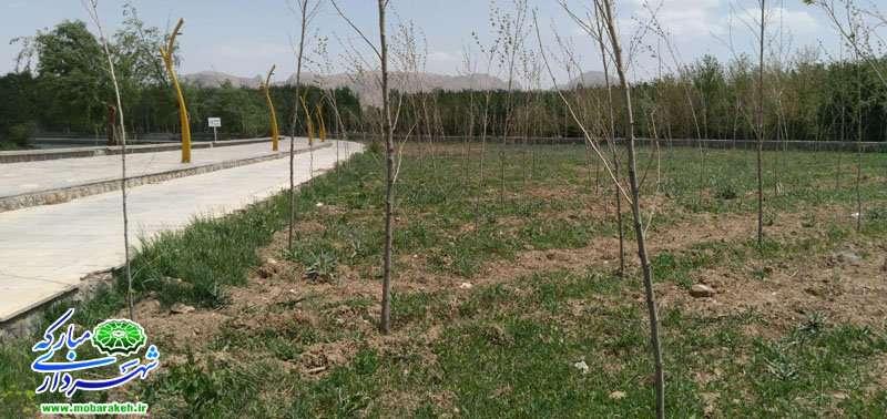 کاشت20 هزار اصله درخت و درختچه در فضاهای سبز شهر مبارکه