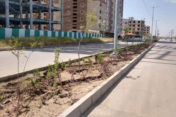 بلوار شهید عباسی نیکو تحت پوشش فضای سبز قرار گرفت