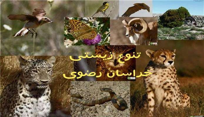 تسهیل دسترسی محققان به مشخصات تنوع زیستی شناسایی شده در خراسان رضوی