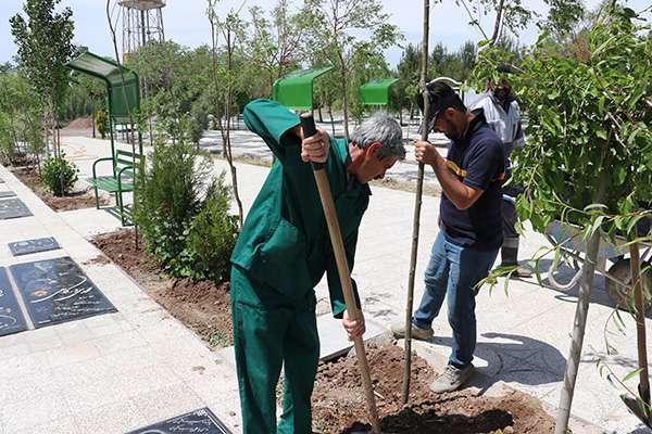 کاشت 80 اصله درخت در آرامستان بهشت فاطمه