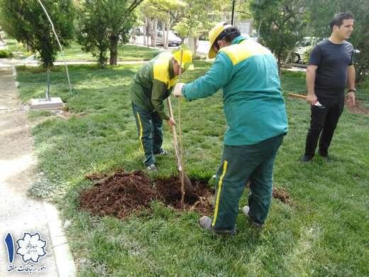 ۴۰۰۰ اصله درخت و درختچه در سطح منطقه کاشت شد