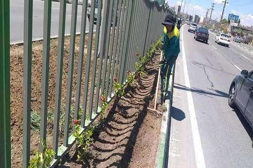 کاشت ۳۷ هزار درخت و درختچه در فضاهای سبز منطقه ۵ تبریز