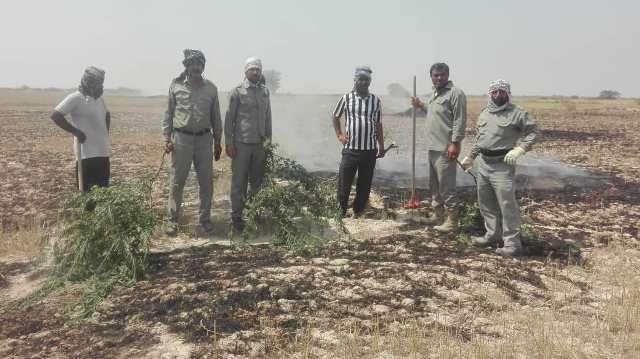 مهار آتش سوزی در منطقه حفاظت شده مند استان بوشهر