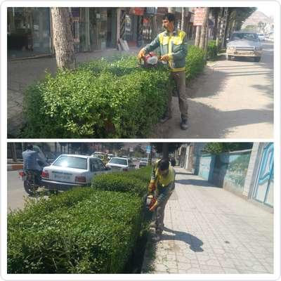 اجرای هرس ترون های خیابان حافظ ابرو