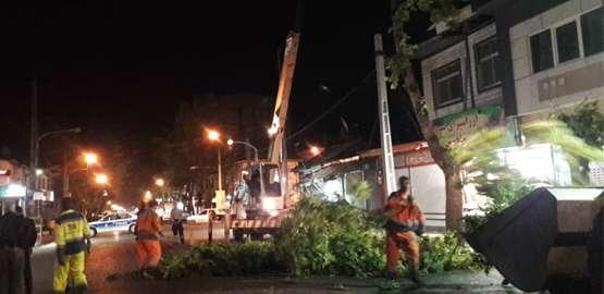 رفع خطر سقوط درختان در وزش باد توسط پرسنل زحمتکش شهرداری رضوانشهر