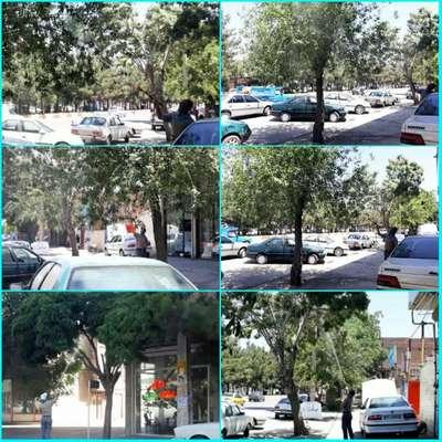 معاونت خدمات شهری شهرداری بناب خبر داد؛  شروع سم پاشی درختان معابر و پارک های سطح شهر