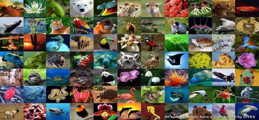 شعار روز جهاني محيط زيست: تنوع زيستي؛ فراخوان اقدام به مقابله با انقراض فزاينده گونه ها و تخريب طبيعت