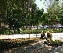 کاشت بیش از ۱۴ هزار متر مربع انواع گونه های گل در سطح منطقه