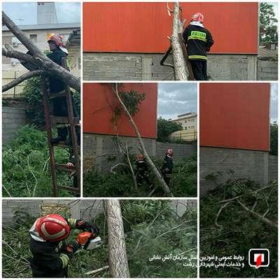عملیات آتشنشانان در پی سقوط درخت در رشت