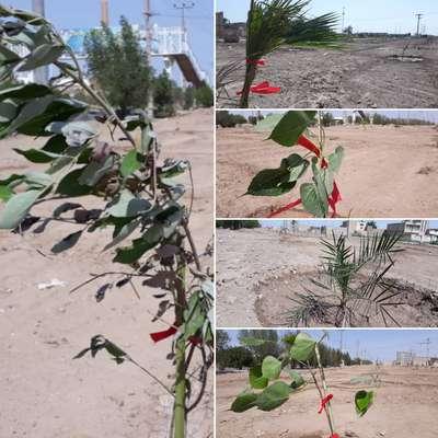 آغاز عملیات اجرایی احداث فاز دوم پارک مالیات توسط شهرداری خرمشهر
