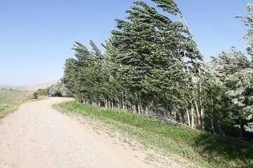 وزش باد شدید و گرد و خاک در برخی استانهای کشور