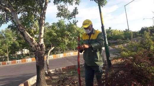 کاشت بیش از ۱۰۰۰ درخت و درختچه در مسیر دیزل آباد و اندیشه