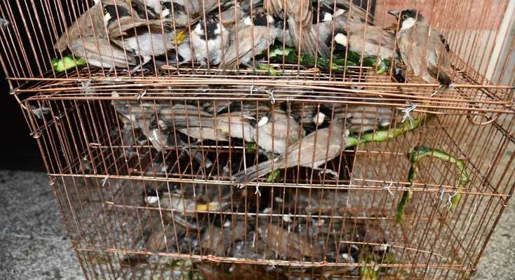 ۱۵۲ قطع بلبل خرما از متخلفان در اهواز کشف و ضبط شد