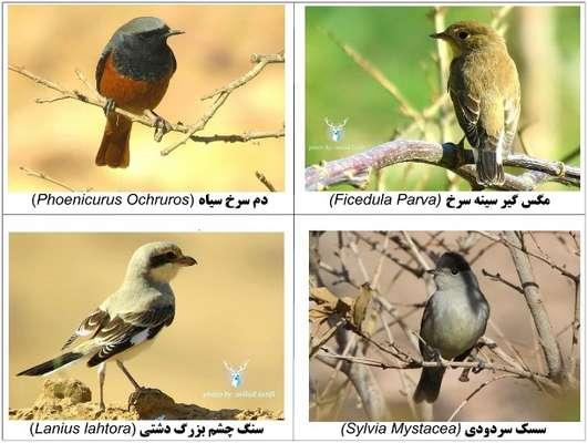 بيش از صد گونه پرنده در پناهگاه حيات وحش يخاب مستندنگاري شد