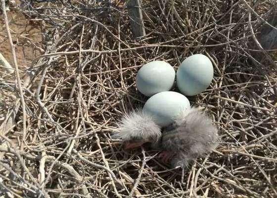 پایش پرندگان آبزی زادآور و عملیات پاکسازی در شهرستان تنگستان