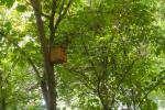 نصب ۴۷۰ آشیانه پرندگان در سطح بوستانهای مشهد