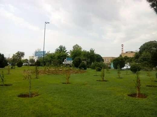 کاشت بیش از  ۲۱ هزار درخت و درختچه در معابر و بوستان های منطقه ۶
