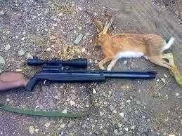 تشکیل پرونده قضایی برای متخلفین کشتار خرگوشهای وحشی
