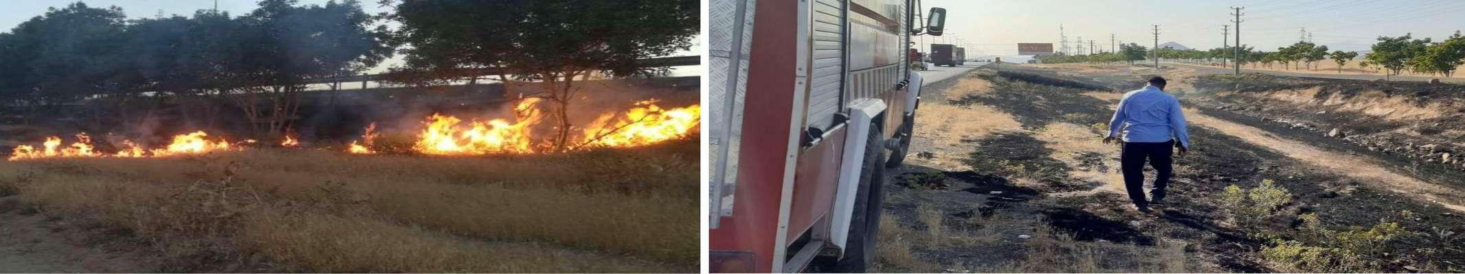 با تلاش کارکنان گروه ایمنی نیروگاه شهید رجایی؛آتش افتاده به جان درختان خاموش شد