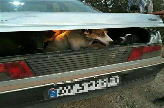دستگیری شکارچیان متخلف با سگهای شکاری تعلیم دیده در ملکشاهی