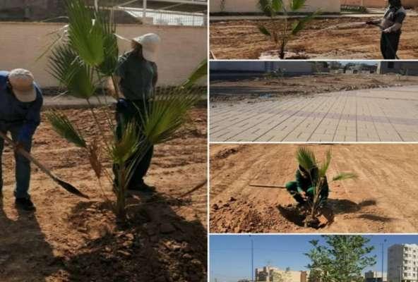 کاشت نهال و احداث فضای سبز در پارک محله ای بلوار یادمان ها توسط شهرداری خرمشهر