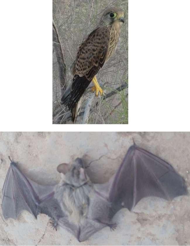 رها سازی یک دلیجه و یک خفاش نعل اسبی در پناهگاه حیات وحش یخاب