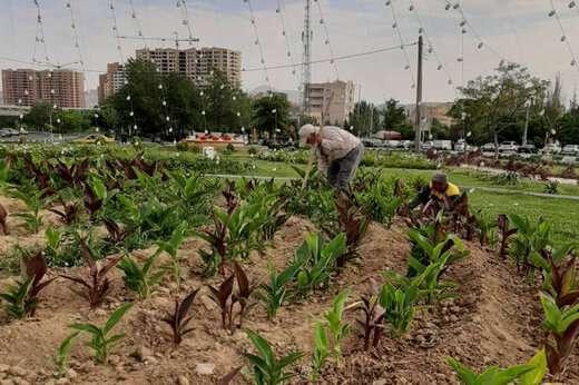 وجین گلکاری چهار پارک تحت پوشش شهرداری منطقه ۲ و میدان ائل گلی
