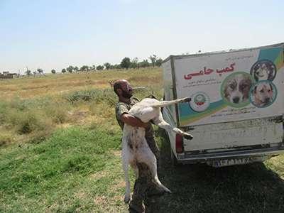 در سه ماهه اول سال بیش از ۳۴۰ قلاده سگ بلاصاحب ساماندهی شد