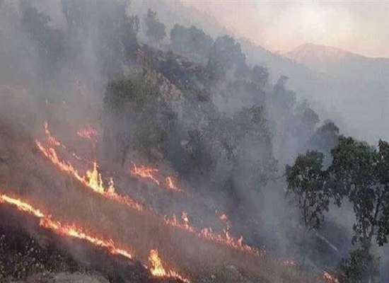 مهار حریق در منطقه حفاظت شده کوسالان – شاهو