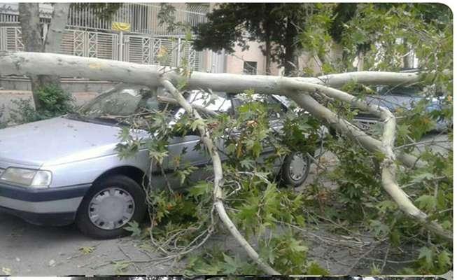 حادثه سقوط درخت روی خودرو