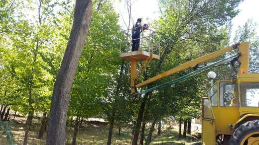 هرس و حذف شاخه های خشک درختان محدوده شهرداری منطقه ۴ تبریز