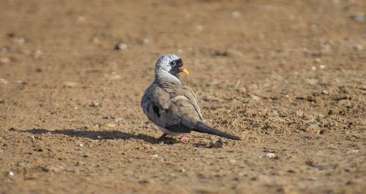 ثبت گونه یک پرنده جدید در پناهگاه حیات وحش یخاب