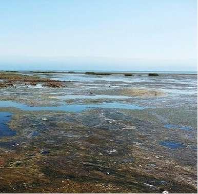 تصویب ۹۰۰ میلیارد تومان برای نجات خلیج گرگان